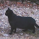 Blackie,On Watch by MaeBelle
