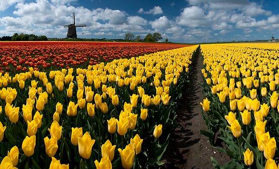 Out In the Tulip Fields by Brendan Schoon