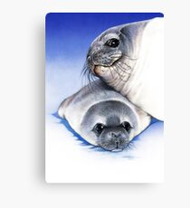 weddell seal and pup Canvas Print