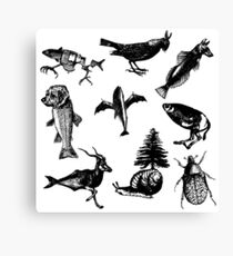 Animal patterns Canvas Print