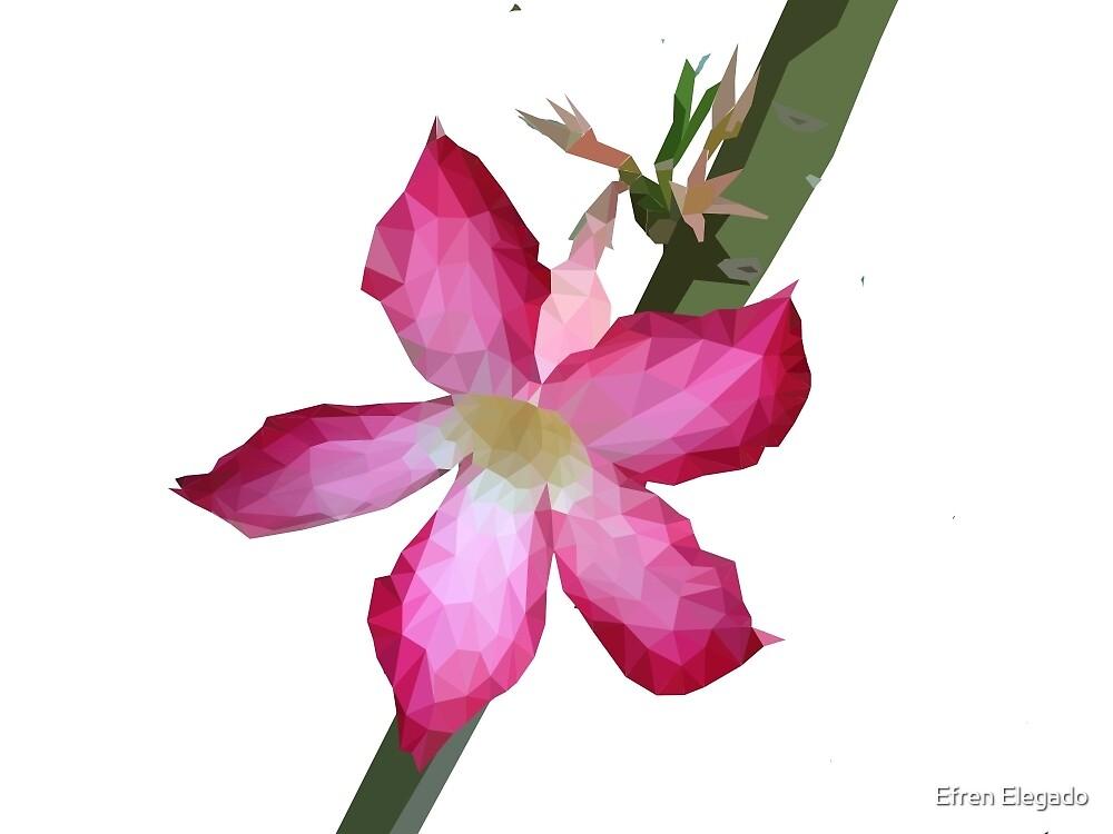 The Summer Blooming of Kalachuchi  by Efren Elegado