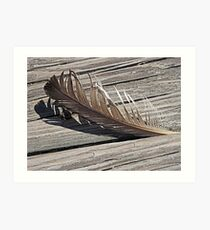 Fair Weather Feather  Art Print