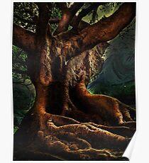 Ficus Macrophylla Poster