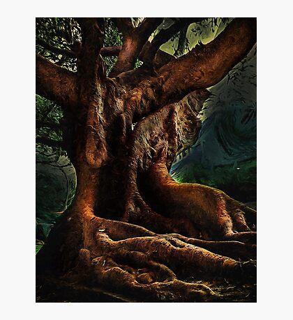 Ficus Macrophylla Photographic Print