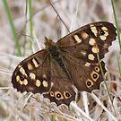 Butterfly by Paul Morley
