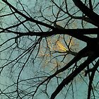 Tree-1 by walterfest