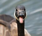 Raspberry Goose by Nigel Bangert