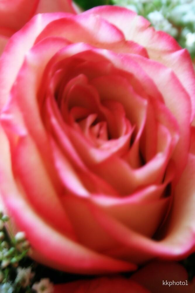 Anniversary Rose. by kkphoto1
