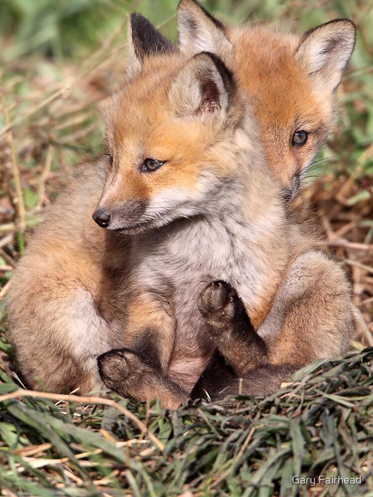 Shy As A Fox by Gary Fairhead