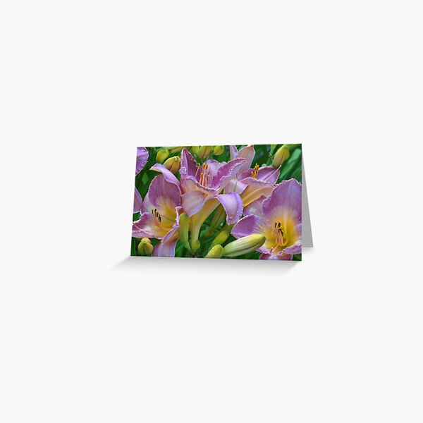 Scent of a Lily Greeting Card
