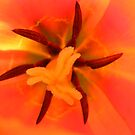 Tulip. by Livvy Young