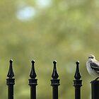 The Mockingbird by Olivia Plasencia