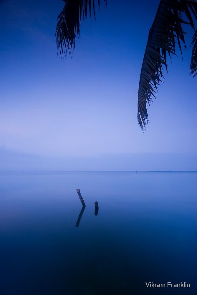 Halycon days by Vikram Franklin