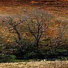 Rawdon Vale Winter by craigmason