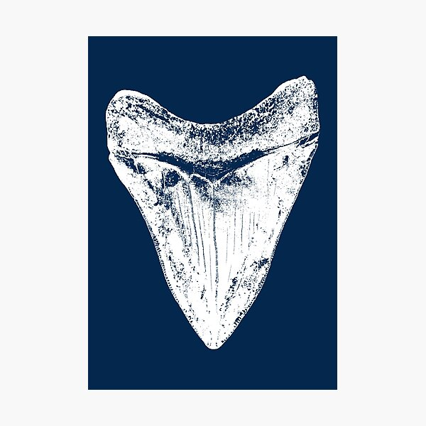 Megalodon Shark Tooth Photographic Print