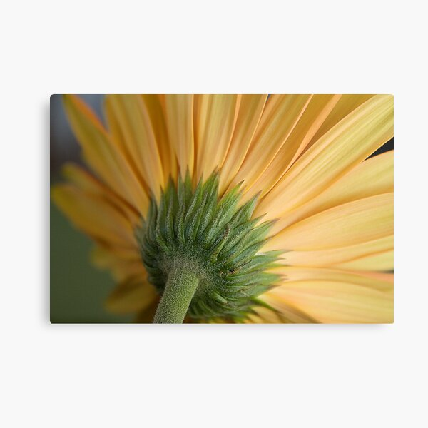 From someone I love. . . Metal Print