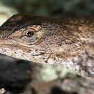 Lunch with a Lizard by Scott Englund