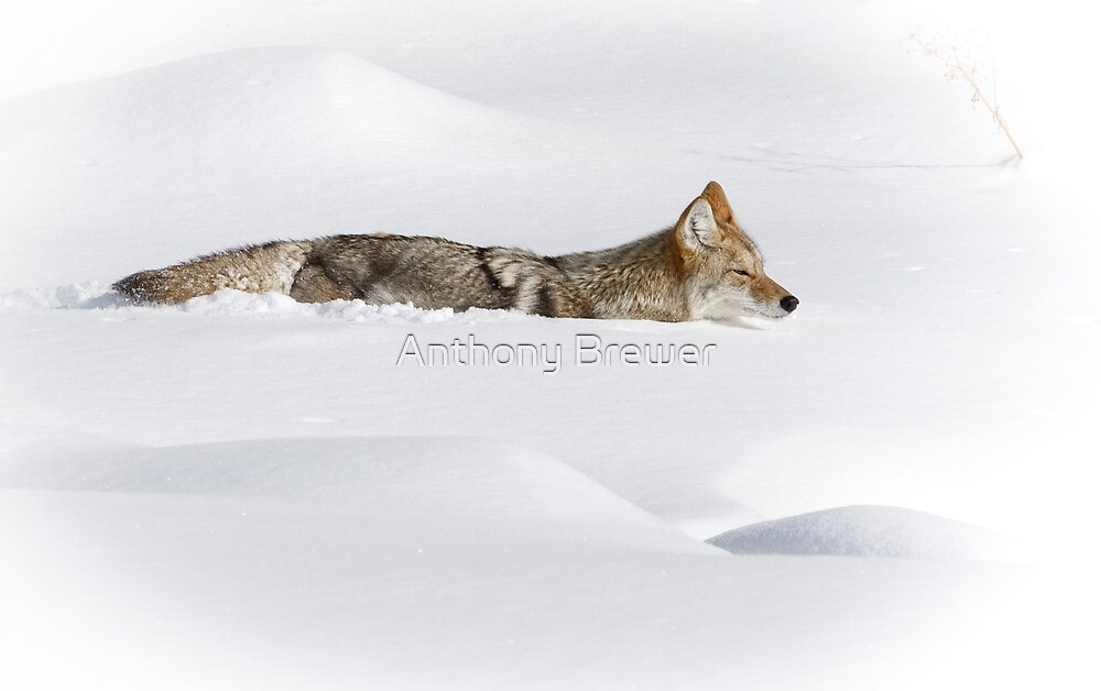 Sinking in the snow by Anthony Brewer