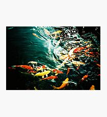 Fish in the pond. Photographic Print