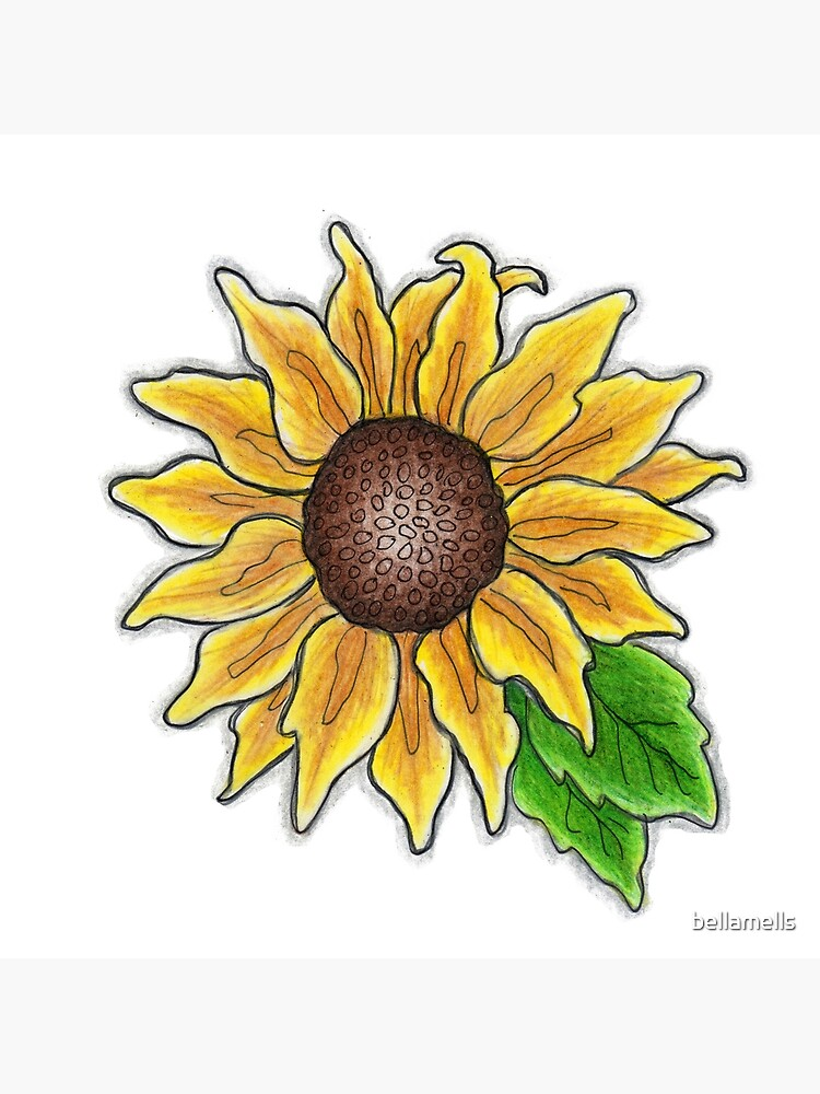 Colored Pencil Sunflower Postcard By Bellamells Redbubble