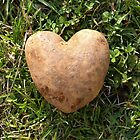 Herzförmige Kartoffel von FrankieCat