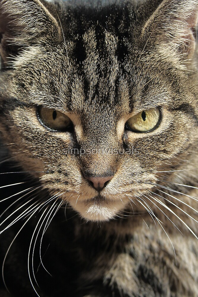 The Huntress - A Tabby Cat about to Pounce by simpsonvisuals