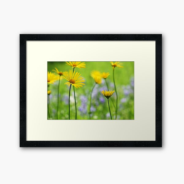 Spring in the Meadow Framed Art Print