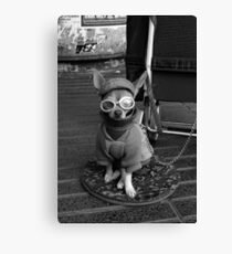 THE SIDEKICK Canvas Print