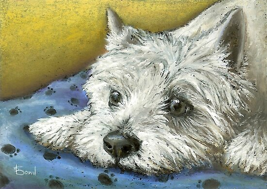 Daydreaming Westie by tanyabond