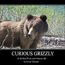 Grizzly poster by Istvan Hernadi