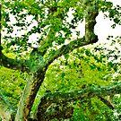 strange tree in italy by xxnatbxx