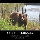 Curious grizzly by Istvan Hernadi