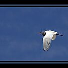 WHITE FLIGHT by BOLLA67