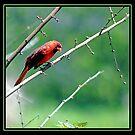 CURIOUS BIRD by BOLLA67