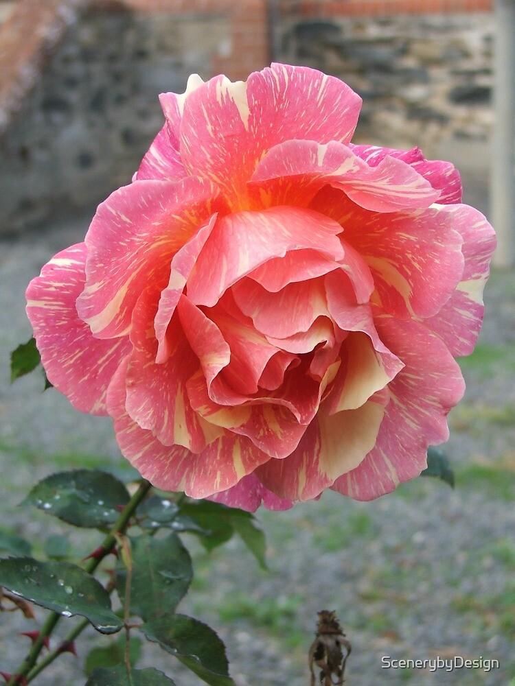 Rose (6357) by ScenerybyDesign