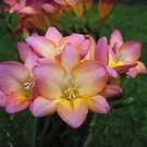Rochelle's Freesia by Pat Yager