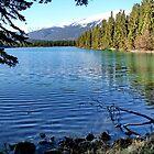 Driftwooft in Lac Beavert by AnnDixon