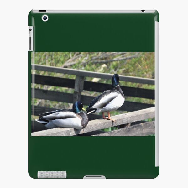 Double Ducks at Abbotsbury Dorset UK iPad Snap Case