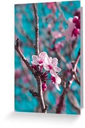 Pink Blossoms by Kitsmumma