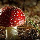 Deep in the forrest (Fly Agaric) by AlMiller