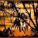 Undara Sunset by Chris Cohen