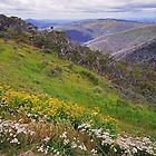 Victorian High Country by Harry Oldmeadow