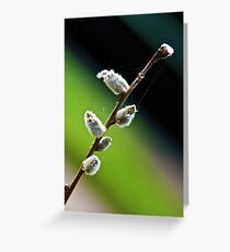 Salix Greeting Card