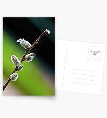 Salix Postcards