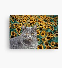 Tabby Cat and Sunflowers Canvas Print