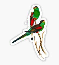 Illustration of the extinct Paradise Parrot Sticker