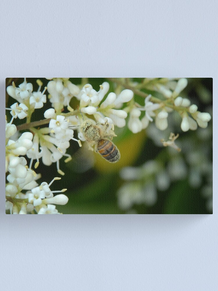 Alternate view of Covered in Pollen Canvas Print