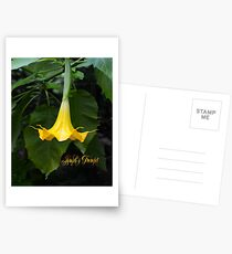Angel's Trumpet Postcards