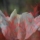 Delight by Lozzar Flowers & Art
