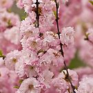 Flowering Almond by Tracey  Dryka